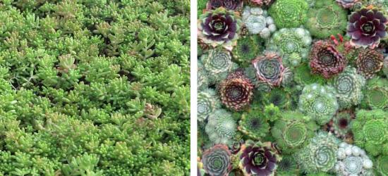 ... toit-terrasse : Bien choisir et bien planter ses plantes d'ornement