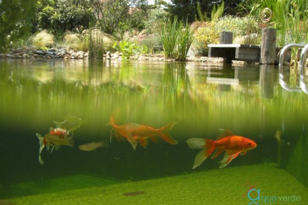 Nagez bio dans une piscine 100 naturelle ma future maison for Desherbant naturel grande surface