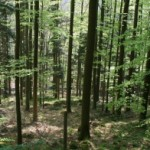 poêle à bois