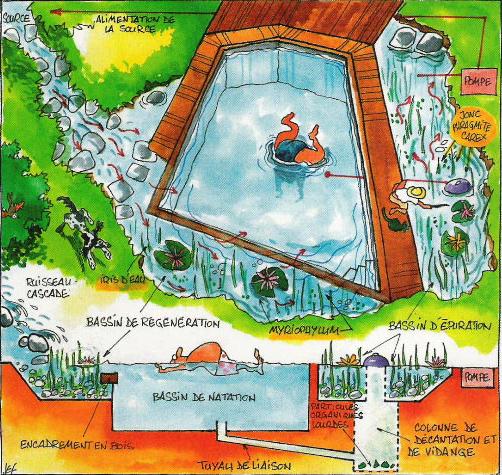 piscine naturelle shéma